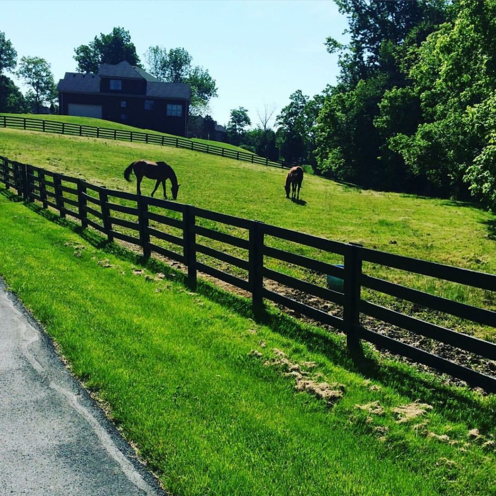 Two horses grazing a fenced, grass field with a large home in the background